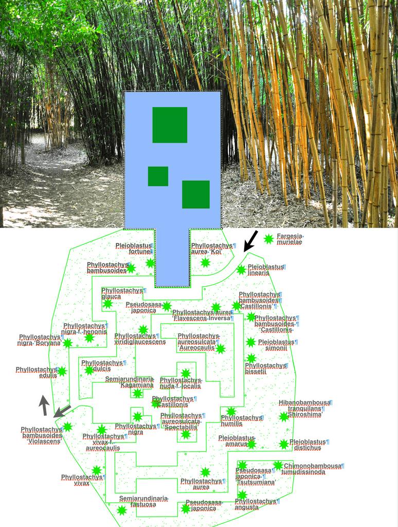 le bosquet de bambous est un dédale de couloirs et de salles